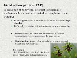 Fixed Action Pattern Example Best BEHAVIOURAL TRAITS UNDER NATURAL SELECTION