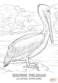 Small Picture Louisiana State Bird coloring page Free Printable Coloring Pages
