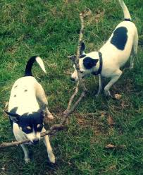 Canine Reflexology