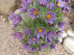 best plants for rock gardens with sensible gardening