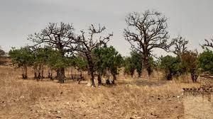 Burkina Faso: Pflanzen | Länder | Burkina Faso