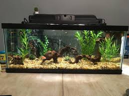 Fish Tank Maintenance Chart Tips For Cleaning And Maintaining Your Tank Filter