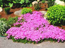 Small Picture Flowers Garden Pictures Ideas Beautiful Flower Bed For Your Free