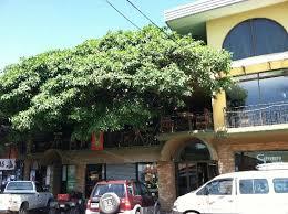 Costa Rica Arenal Monteverde And Manuel Antonio  FAVI TravelTreehouse Monteverde Costa Rica
