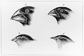 darwin was right darwin s theory of natural selection darwin finches