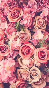 rose flowers wallpaper pink wallpapers