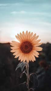 sunflower wallpaper #wallpaper #iphone ...