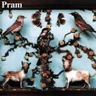 Cat's Cradle by Pram