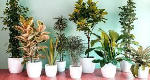 good indoor plants good indoor plants low light best indoor plant 5 best low light indoor good indoor plants