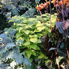 Small Picture Great Plants for Pacific Northwest Landscapes