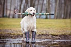 Прогулки с собакой в холод и дождь - LOVE <b>FERPLAST</b>
