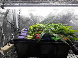 fresh health hydroponics cirrus led grow lights in florida