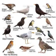 Useless Bird Identification Chart 9gag
