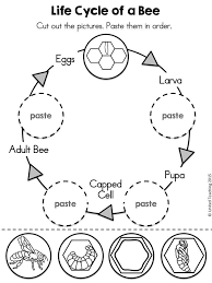 Insects No Prep Activities | Ant, Worksheets and Insects