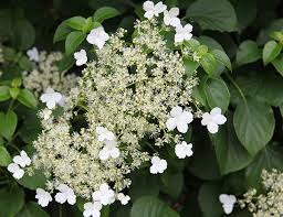 3 Evergreen Wall Climbing Plants For Shade And PrivacyClimbing Plants That Like Shade