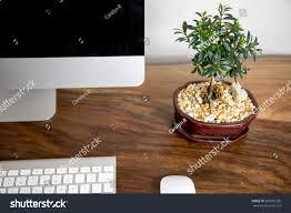 office bonsai. Bonsai Ficus Plant Computer Office Desk N