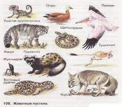 Сообщение по окружающему миру на тему Природные зоны России  животные