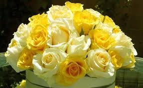 Image result for images of yellow and white roses