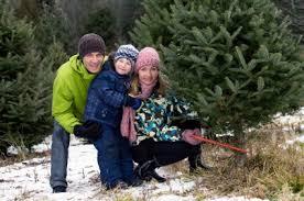 Cut Your own Christmas tree farm