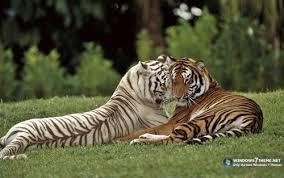 Amazing world animals