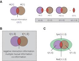Mutual Information Venn Diagram Venn Diagrams Of Mutual Information And Interaction Information A