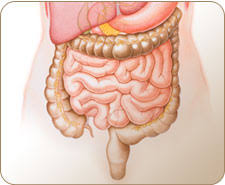 what is crohn    s disease and how does it effect the bodyintestines diagram