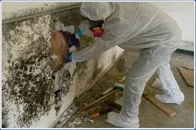 Commercial Mold Remediation: What Is It and How It's Done!