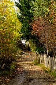 outdoor backgrounds. Free Images : Landscape, Tree, Nature, Forest, Outdoor, Wilderness, Trail, Sunlight, Leaf, Flower, Country Road, Stream, Orange, Green, Red, Color, Outdoor Backgrounds I
