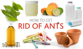 7 ways to get rid of ants using common household items