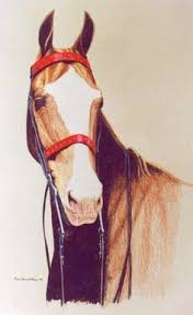 american saddle horse note cards by olva stewart pharo note cards made from original pencil drawings