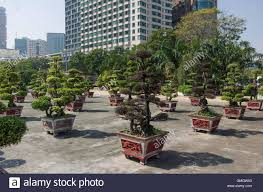office bonsai. Square With Little Bonsai Tree Modern Office Building On Background. Ho Chi Minh City, Vietnam O