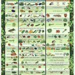 garden guy planting calendar vegetable garden planting calendar zone 5 garden schedule zone 6