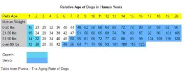 Dog Chart For Age Is It True That Dogs Age 7 Years For Every One Human Year