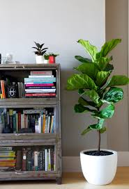 Interior Design Plants Inside House Interior Decoration Choosing The Right Indoor Plants
