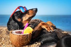 <b>Радиоуправляемые</b> очки для животных разработали ...
