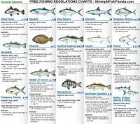 Florida Fishing Seasons Chart Florida Keys Fishing Seasons Chart Fwc Recreational
