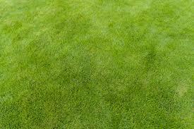 Grass Texture Wallpapers | NM.CP Wallpapers Grass Texture - HD Wallpapers