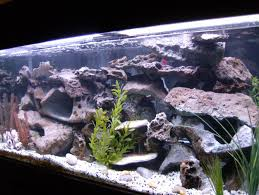 african cichlid tank lots of rocks in here i like it except for the large rock