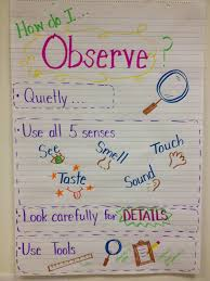 What Do Scientists Do Anchor Chart Science Observers Anchor Chart Science Writing Science