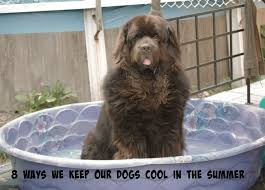 Newfie Puppy Growth Chart 8 Easy Ways To Keep Dogs Cool During The Summer