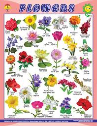 Flower Chart In English Flower Name In Marathi Best Flower Site