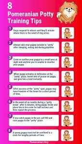 Puppy Bathroom Chart How To Potty Train A Pomeranian