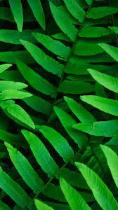 Green leaves 4K Wallpaper, Ferns, Leaf ...
