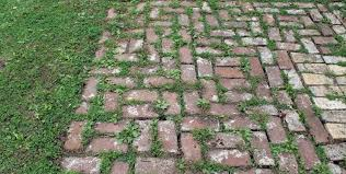paver cleaning and sealing