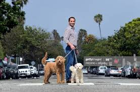 DogVacay co-founder and CEO Aaron Hirschorn walks Rocky and Maggie... News  Photo - Getty Images