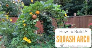 to build a squash arch for your garden