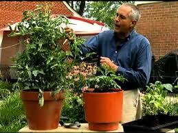 patio vegetable gardening