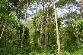 Potensi Sumber Daya Hutan di Indonesia