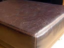 leather sofa or cat scratcher