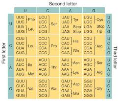 Universal Genetic Code Chart Universal Genetic Code